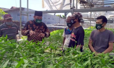HIDROPONIK - Bacabup Sidoarjo, Bambang Haryo Soekartono (BHS) berdialog dengan pengelola pertanian hidroponik di Desa Wage, Kecamatan Taman, Sidoarjo dalam rangka menciptakan ruang terbuka hijau privat, Selasa (28/7/2020)