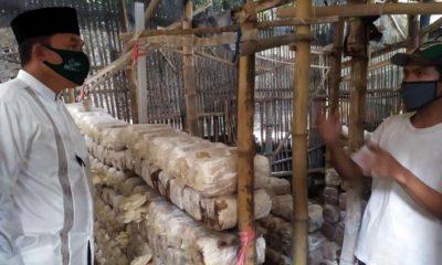 MOTIVASI - Bacabup Sidoarjo, Bambang Haryo Soekartono (BHS) memberi motivasi petani jamur, Eko Andik Susanto warga Desa Keper, Kecamatan Krembung, Sidoarjo agar meningkatkan produksinya sekaligus memberikan bantuan, Selasa (04/08/2020)